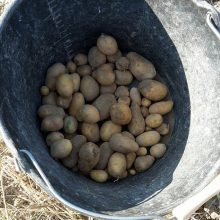 Pleins de Patates